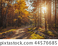 forest, autumn, road 44576685
