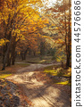 forest, autumn, road 44576686