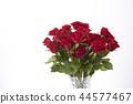 bloom, blossom, blossoms 44577467