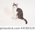 坐着的小猫(柚子) 44580329