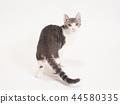小猫转身(柚子) 44580335