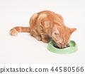 吃食物的小猫 44580566