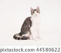 坐着的小猫(柚子) 44580622