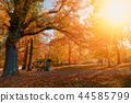 autumn in park in fall season 44585799