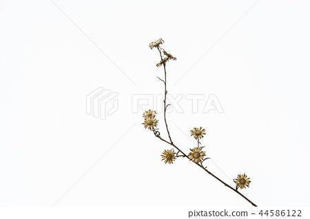 꽃받침,결실 44586122