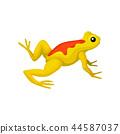 frog, amphibian, yellow 44587037