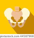 pelvis, icon, bones 44587968