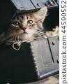 새끼, 고양이, 애완동물 44590552