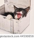 kitten, cat, pet 44590656