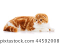cat, animal, pet 44592008