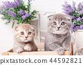 cat, pet, kitten 44592821