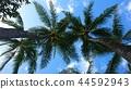 藍天和棕櫚樹 44592943