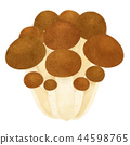 white background, mushroom, mushrooms 44598765