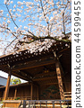 yasukuni shrine, cherry blossom, cherry tree 44599455