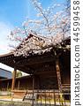 ศาลเจ้ายาสุกุนิ,ดอกซากุระบาน,ซากุระบาน 44599458