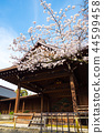 Yasukuni Shrine Nohgakudo and cherry tree (Chiyoda-ku, Tokyo) March 2018 44599458