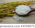 Jasmine white rice with gold grain from agricultur 44599673