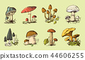 set of Fungus hand drawn engraved. vintage organic vegetarian food. Mushroom champignon 44606255