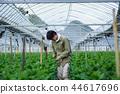 농업, 하우스 재배, 국화 44617696