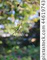 무당 거미 44619743