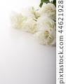 洋桔梗花 桔梗 花朵 44621928