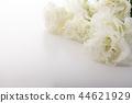 洋桔梗花 桔梗 花朵 44621929