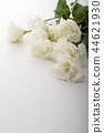 洋桔梗花 桔梗 花朵 44621930