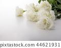 洋桔梗花 桔梗 花朵 44621931