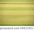 풍경, 경치, 논 44631951