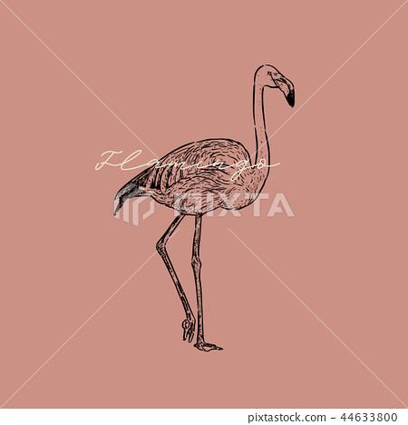 Flamingo vector illustration. 44633800