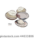 Clams, mussels, seafood, sketch style vector 44633806