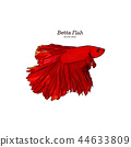 Betta fish, Hand draw sketch vector. 44633809