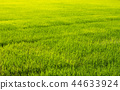 field, green, agriculture 44633924
