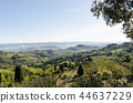 Green Tuscany landscape view 44637229