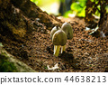 Three cute mushrooms growing in the forest 44638213