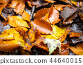 Beautiful autumn leafs on the ground in the park 44640015