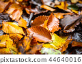 Beautiful autumn leafs on the ground in the park 44640016