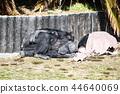 침팬지의 낮잠 44640069