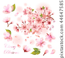 櫻花的素材集 44647585