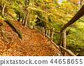forest path with wooden fence 44658655