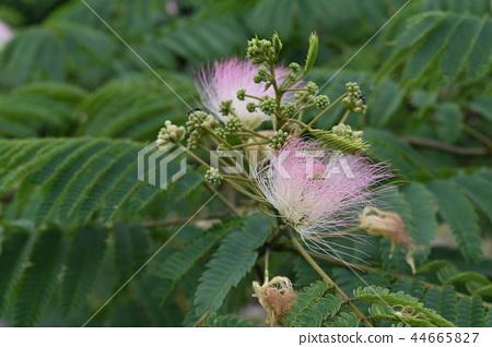混合的花朵 44665827