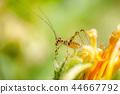 colorful grasshopper 44667792