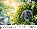 World globe crystal glass on green leaves bush 44670656