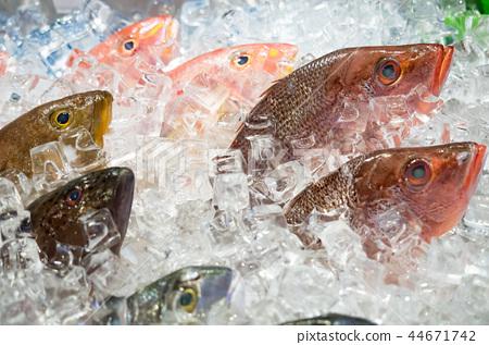 鮮魚 44671742