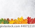 autumn, fall, maple 44672210