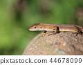 reptile reptilian animal 44678099
