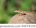 reptile reptilian animal 44678100