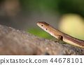 reptile reptilian animal 44678101