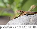 reptile reptilian animal 44678106