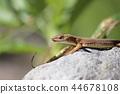 reptile reptilian animal 44678108